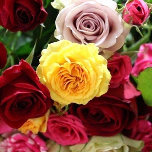 【たんばら園から産地直送!】ばらの花束30本セット