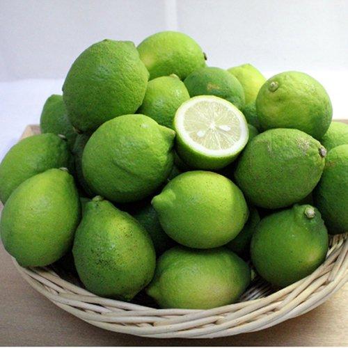 【農家直送】愛媛県産レモン【送料無料】※同梱不可