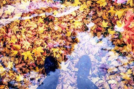 秋限定 カフェ ヌーベス