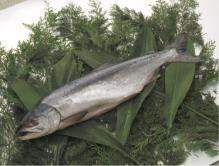北海道産新巻鮭【秋鮭オス】