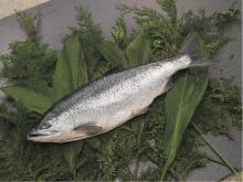 新巻鮭【銀鮭】