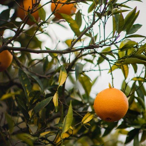 スイートオレンジフロクマリンフリーアロマ精油(天然エッセンシャルオイル)