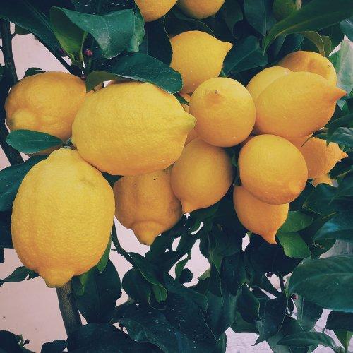 レモンフロクマリンフリーアロマ精油(天然エッセンシャルオイル)