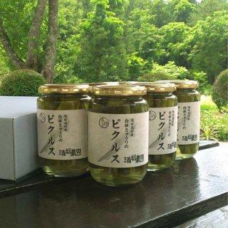 自根きゅうりのピクルス(370g)6個セット