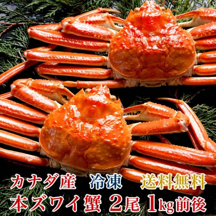 本ズワイ蟹 1.0kg  1尾500g前後×2尾  【送料無料】  かに 蟹 カニ