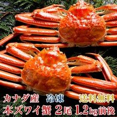 ズワイガニ 姿 2尾(総量1.2kg前後)カナダ産 ずわいがに 本ズワイガニ ズワイ蟹 蟹みそ 蟹味噌 ギフト 贈答 御礼 グルメ 海の幸 海鮮 新潟 送料無料