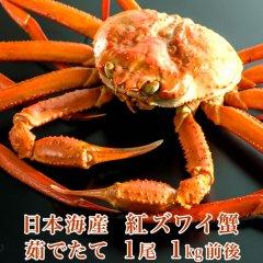 日本海産 茹でたて紅ズワイ蟹 1尾 1kg前後【かに カニ 蟹】【希少】【品薄】