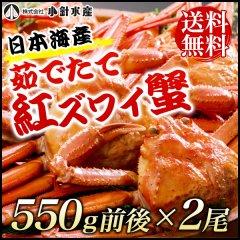 【送料無料】日本海産 茹でたて紅ズワイ蟹 550g前後x2尾【かに カニ 蟹】