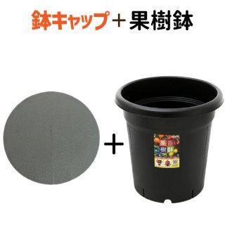 果樹鉢365型 ★ 鉢キャップコガネガードセット