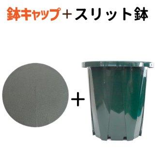 6号スリット鉢【懸崖タイプ】 ★ 鉢キャップコガネガードセット