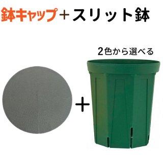 2色から選べる 8号ロングスリット鉢★鉢キャップコガネガードセット